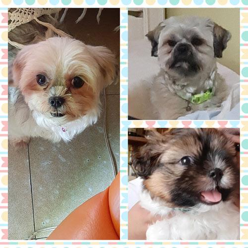 Cha's pups